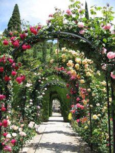 roniroosid kaunistamas aeda lilleredelitel
