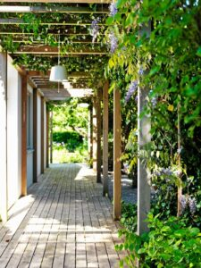 ronitaimed kaunistamas terrassi