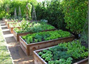 Istutuskast on söögitaimede kasvatamiseks praktiline